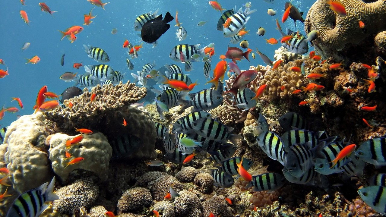 the disturbance and degradation of coral reefs in the ocean due to human intervention